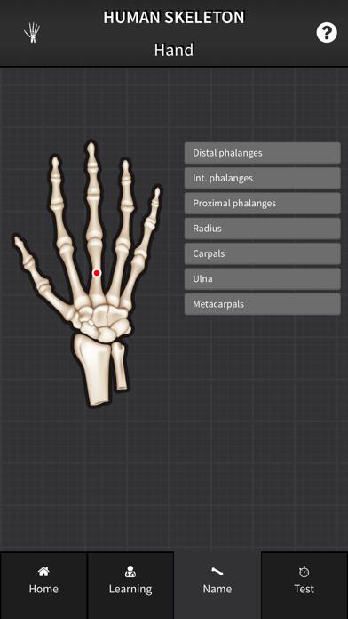Human Skeleton: Bones for beginners screenshot three