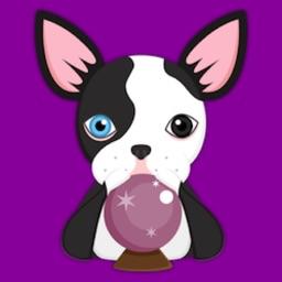 Splash Boston Terrier Emoji Stickers for iMessage