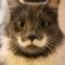 Cat Wallpaper Top HD