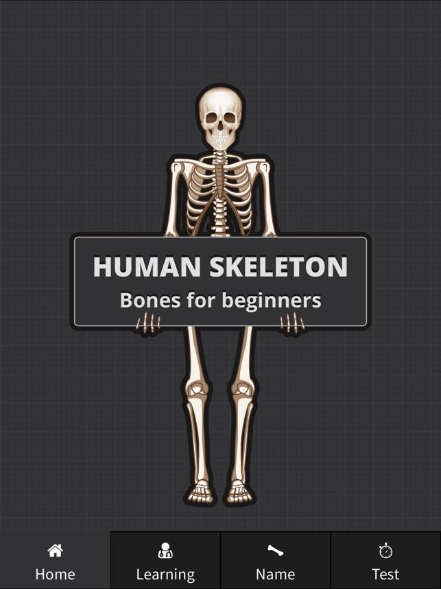Human Skeleton Bones For Beginners On The App Store