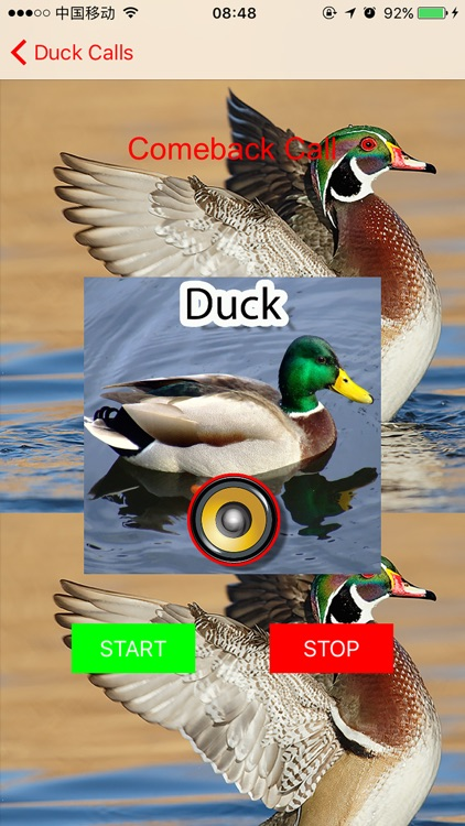 Real Duck Hunting Calls & Sounds