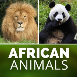 African American Zoo - Wild Animal's Wallpapers