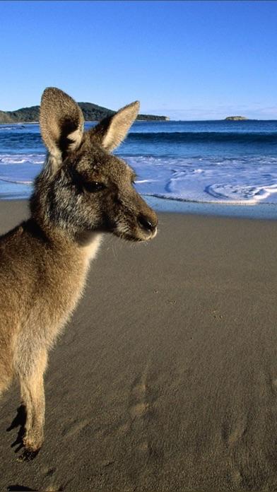 オーストラリアのおすすめ画像5