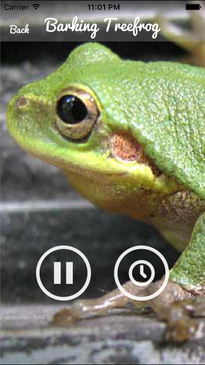 Frog  Sounds - Toad, Greenhouse Frog