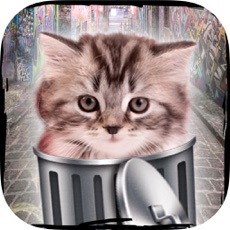 Activities of Hello cute cats – Kittens in the world & cat game