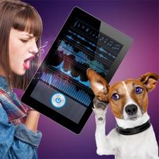 Activities of Dog Translator Prank