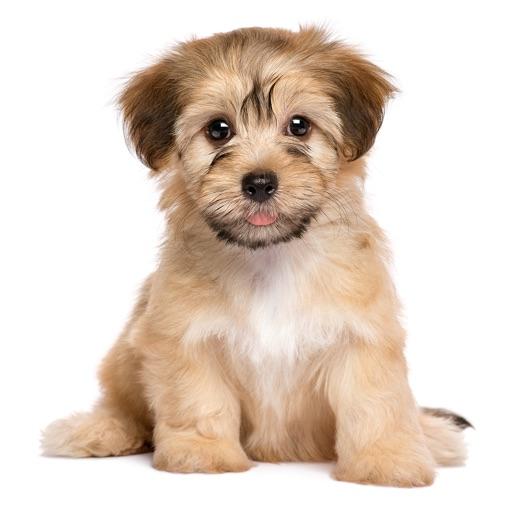 わんこライフ : 可愛いわんちゃんを育てる犬の育成パズルゲーム
