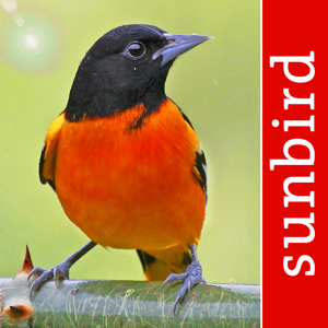 Bird Id USA Guide to identify Backyard Birds app