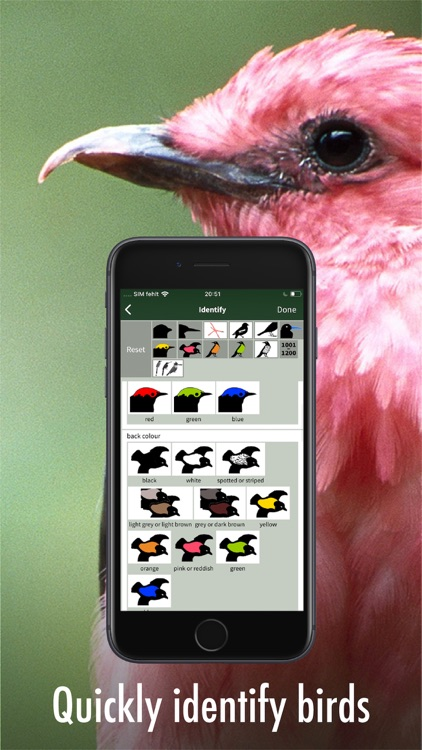 All Birds Guianas screenshot-5