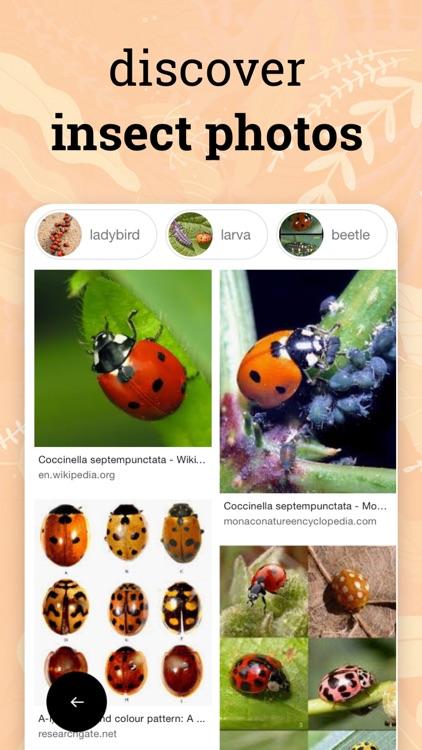 Insect identification · screenshot-3