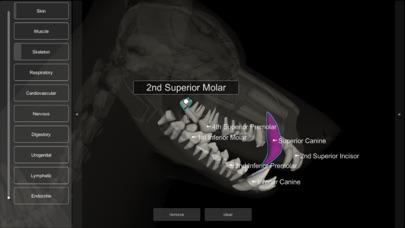 3D Canine Anatomyのおすすめ画像8
