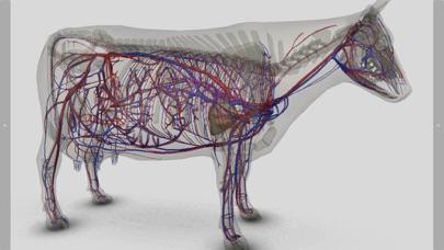 3D Bovine Anatomyのおすすめ画像9