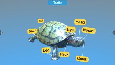 Diversity in Living: Reptilia screenshot 4