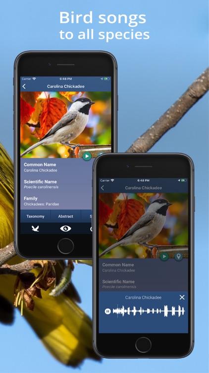 Bird Id USA - backyard birds screenshot-7