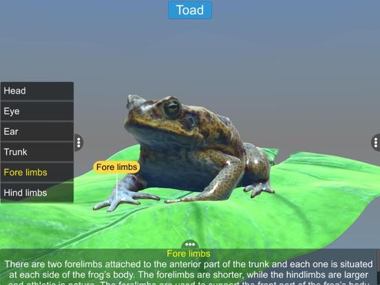 Diversity in Living: Amphibia screenshot 18