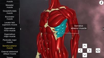 Learn Muscular System screenshot 4