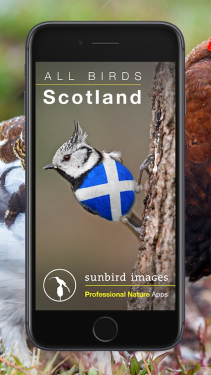 All Birds Scotland Photo Guide