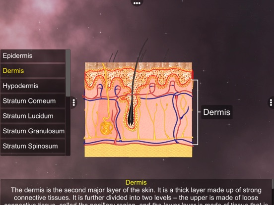 Skin: Integumentary System screenshot 10
