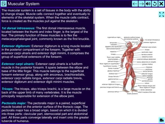 The Amazing Human System screenshot 8