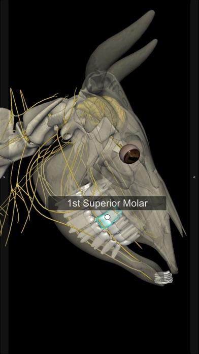 3D Bovine Anatomyのおすすめ画像6