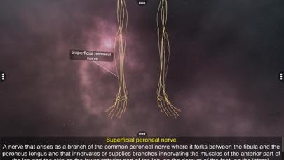 Human Nervous system screenshot 4