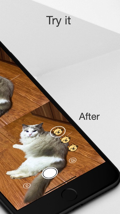 MeowCam-Play sound attract pet