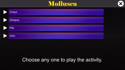 Diversity in Living: Mollusca screenshot 2