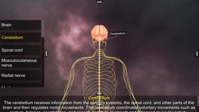 Human Nervous system screenshot 3