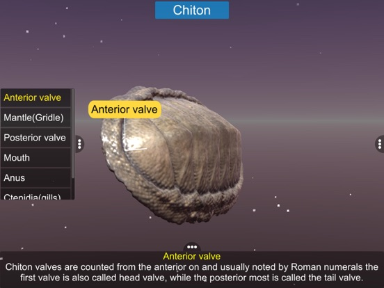Diversity in Living: Mollusca screenshot 12