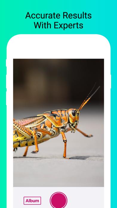 Insect Identifier - Scan Bugs screenshot 2