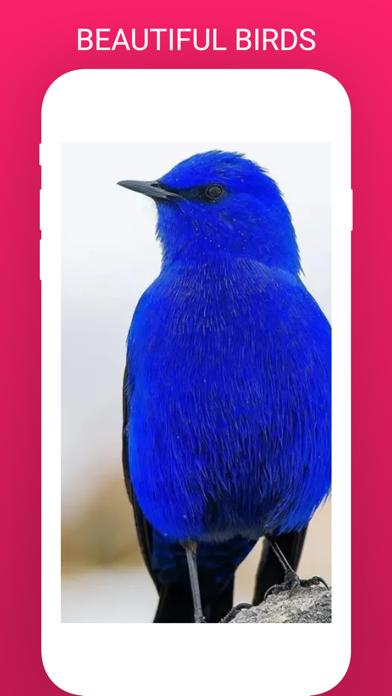 Bird Box - Photo Identify Bird screenshot 2