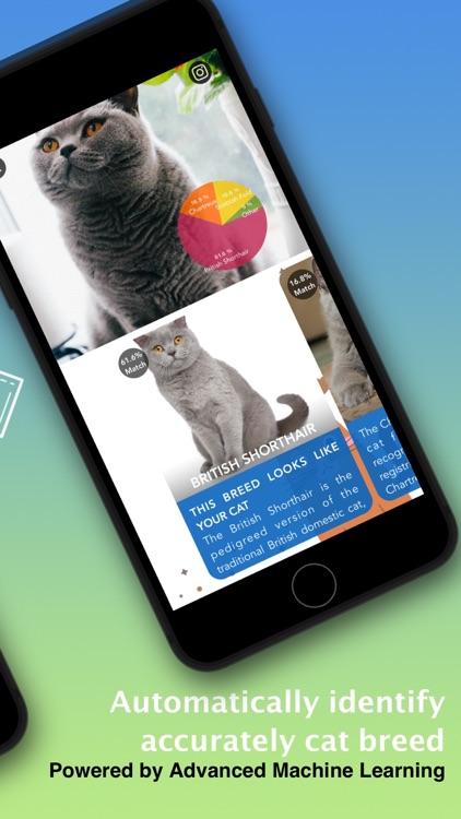 Cat Identifier - Kitty Scanner