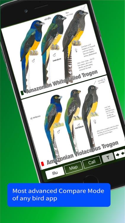 All Birds Trinidad and Tobago screenshot-6