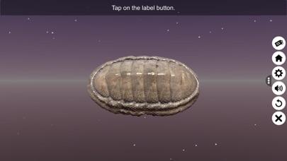 Diversity in Living: Mollusca screenshot 3