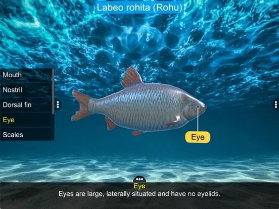 Diversity in Living: Pisces screenshot 12