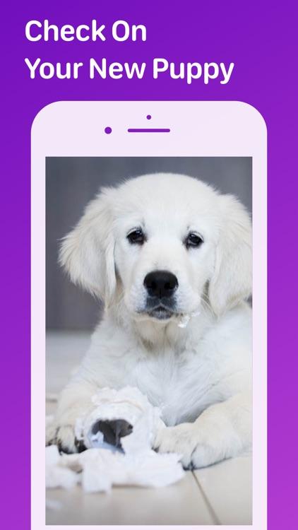 Pet Monitor VIGI screenshot-3