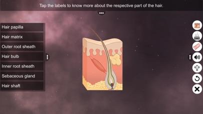 Skin: Integumentary System screenshot 4