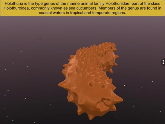 Echinodermata screenshot 13