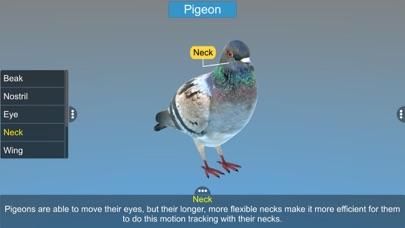 Diversity in Living: Aves screenshot 9