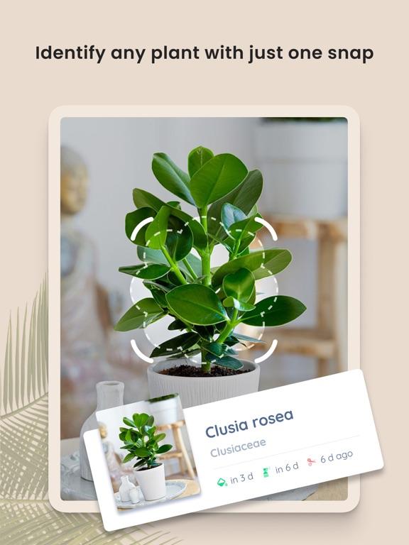 PlantIn: Plant Identifier screenshot 9