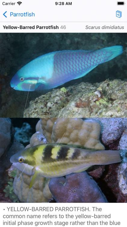 Solomon Islands Fish ID screenshot-6