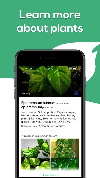 Plant Identifier - WhatPlant screenshot 4