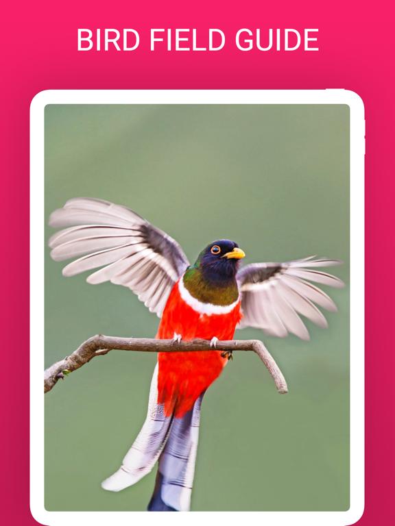 Bird Box - Photo Identify Bird screenshot 7