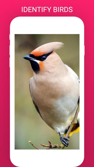 Bird Box - Photo Identify Bird screenshot 1