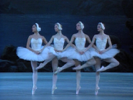 Swan Lake: Cygnet Dance (Extract)