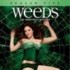 Weeds, Season 5 - Synopsis and Reviews