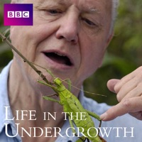 Télécharger Life In the Undergrowth, Series 1 Episode 5