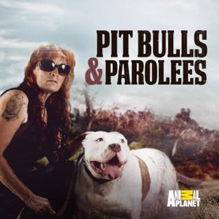Pit Bulls and Parolees, Season 10 on iTunes