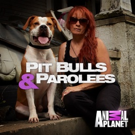 pit bulls & parolees down, not out