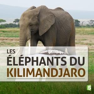 Les éléphants du Kilimandjaro - Episode 1